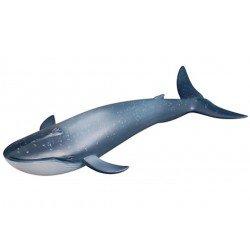 Blauwe walvis Figuur