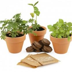 Trio van 3 bijzondere plantenpotten