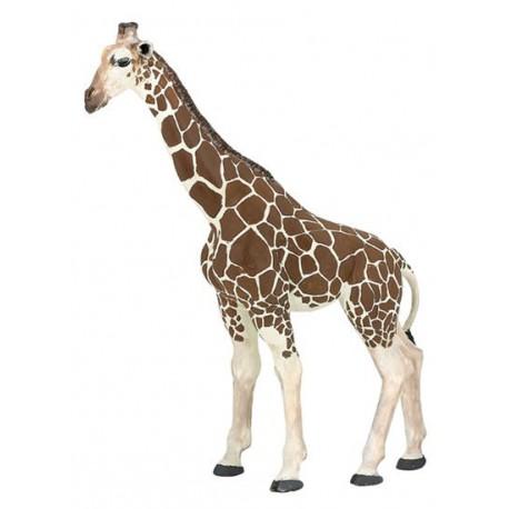 12pcs Wild Zoo Safari Animaux Modèle Renne Raton Laveur Antilope Figurine