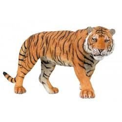 Tigre PAPO